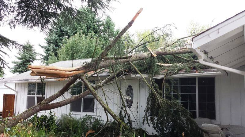 Home damaged by tree downed by lightning strike