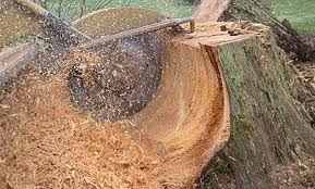 stump-grinding for stump removal