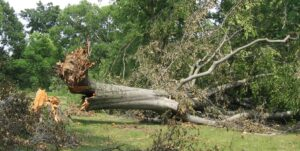 Tree Risk Assessment, Inspection & Tree Inventory Services