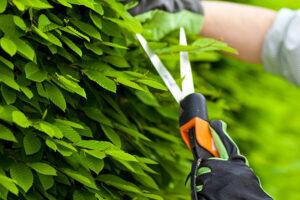 stein-tree-service-shrub-pruning