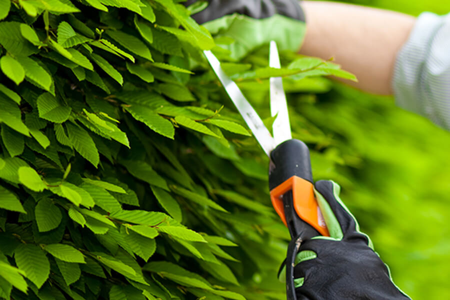 stein-tree-service-shrub-pruning