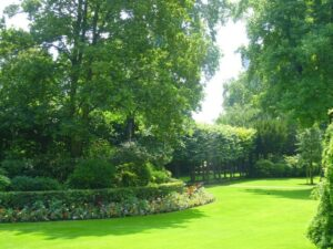Green lawn bordered by shrubs and trees-Plant Health Care Services (PHC) by Stein Tree Service