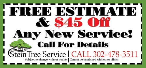 Stein Tree Service Discount Coupon