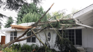 Emergency Tree Removal Service in Wilmington; A tree has fallen onto a house, crushing part of the roof