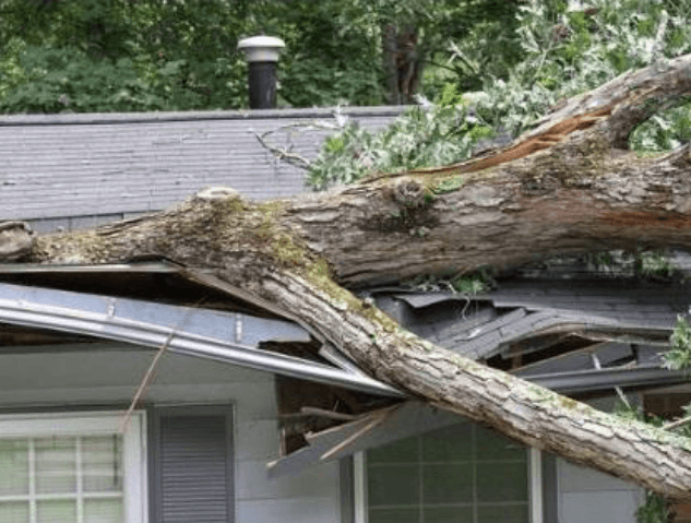 emergency-tree-removal-service-in-wilmington