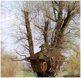 Certified Arborist in Wilmington - What is Tree Topping and Why is Tree Topping a Poor Practice?