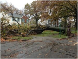Emergency Tree Removal Service in Wilmington