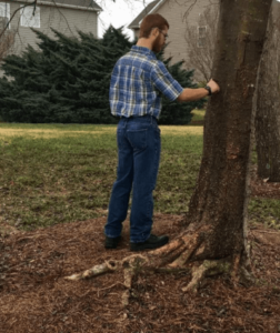 Why Should You Hire a Certified Arborist