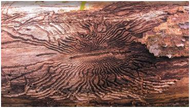 stein-tree-pr