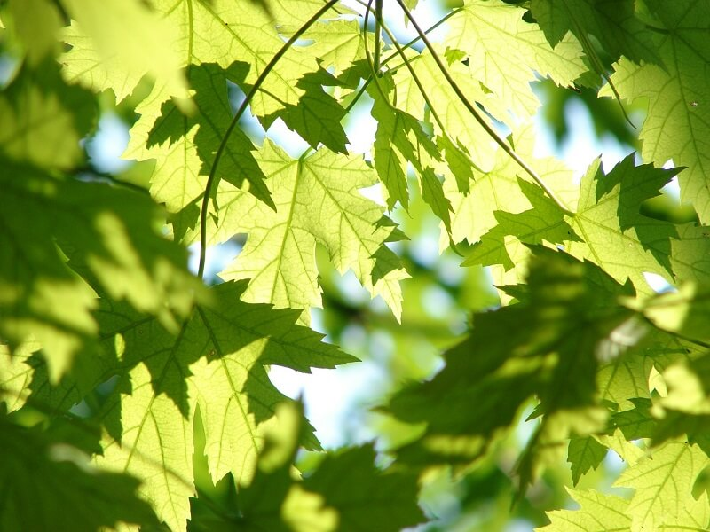 tree-and-plant-health-care-media-pa