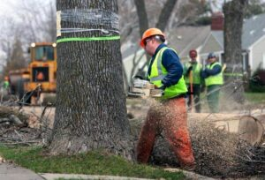 Tree Removal Aston, PA | Stein Tree Services