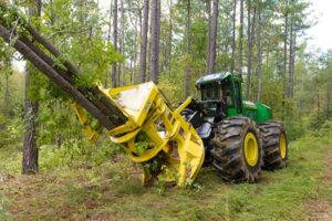 Tree Removal in Delaware