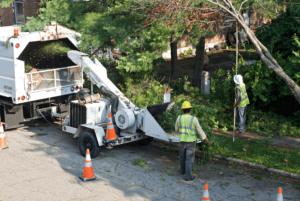 Tree Removal in Media, PA