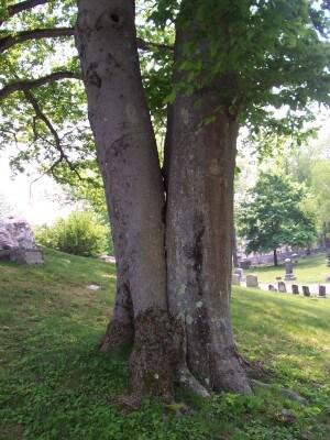 Tree Removal in Wilmington, DE Tree Crotch
