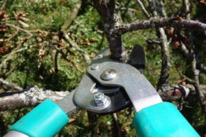 tree trimming and Pruning Chester County PA- pruning-shears