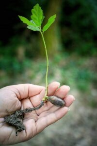Person holding tree sapling | Right Way to Plant Trees | Stein Tree Service