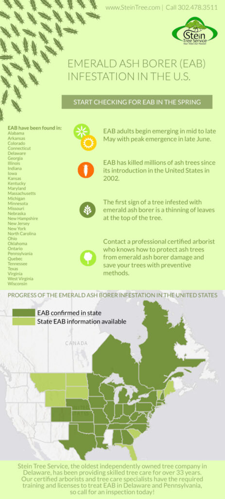 Infographic of Emerald Ash Borer Infestation in the United States