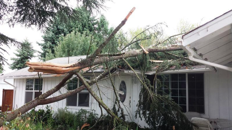 Tree-Removal-Service-in-Wilmington