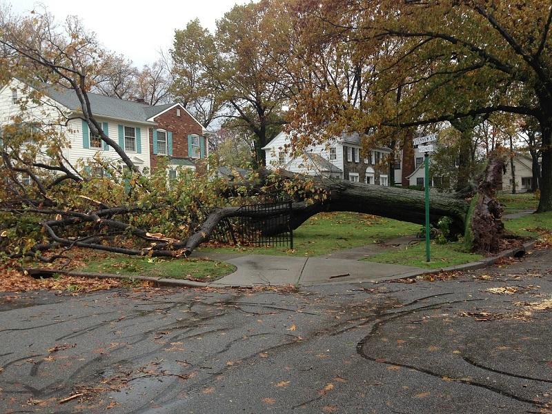 emergency-tree-removal-service-Wilmington-DE-800