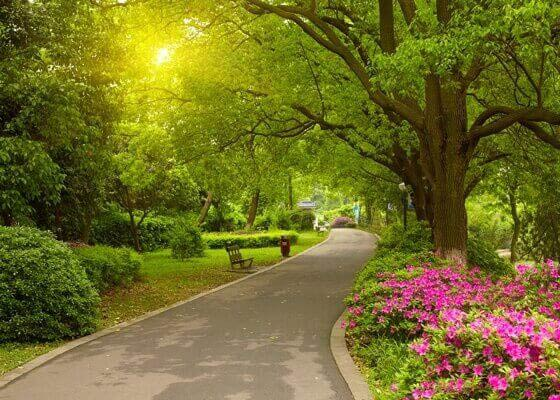 Photo of a park with various plants and trees | tree care company | Stein Tree Service