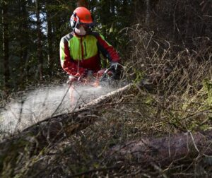 tree care specialialists in Newark DE - removing downed trees - Stein