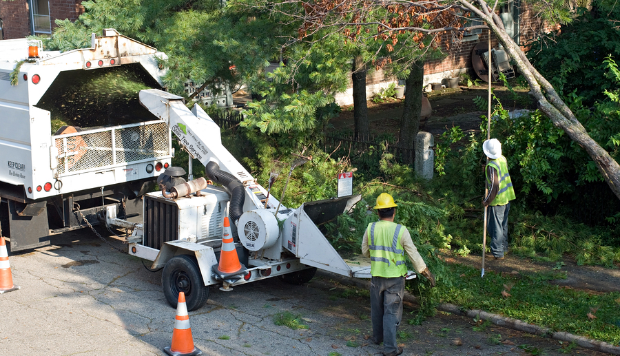 tree removal - Stein-tree-service-chipper