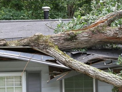 Tree toppled over onto roof of house | Commercial Tree Risk Assessment | Stein Tree Service