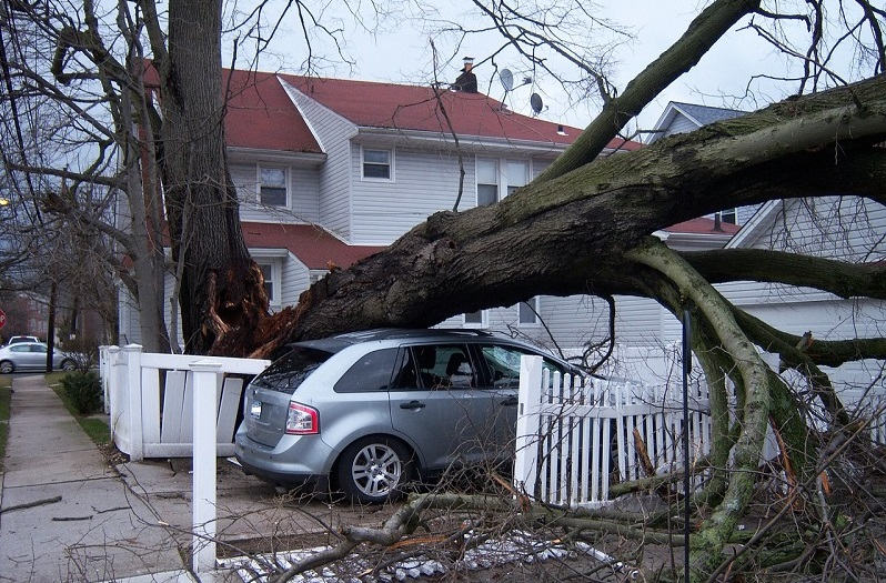 Emergency Tree Removal Service - tree fallen on top of a car in a driveway.