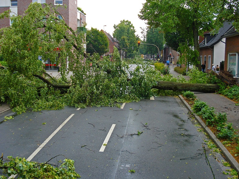 emergency tree removal - tree fallen across town street - Stein Tree Service - 800