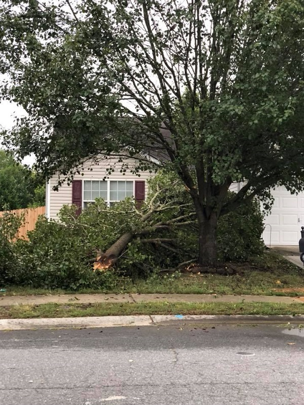 emergency tree removal - tree fallen in residential yard- Stein Tree Service - 800
