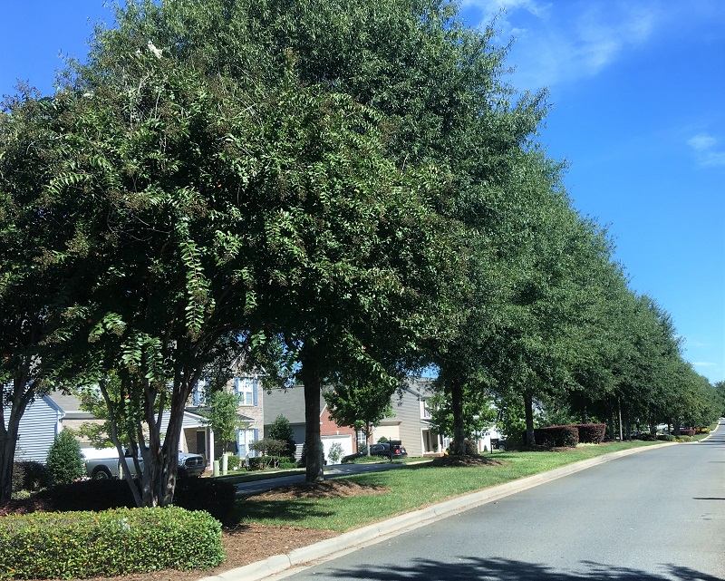 Plant and Tree Care Services include tree trimming and pruning in Delaware and Pennsylvania