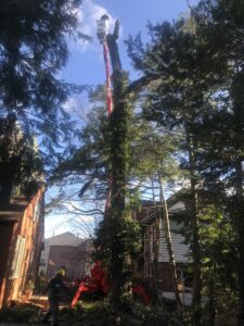 Arbor Pro Mini Lift allows for easier and safer tree care - Stein Tree Service