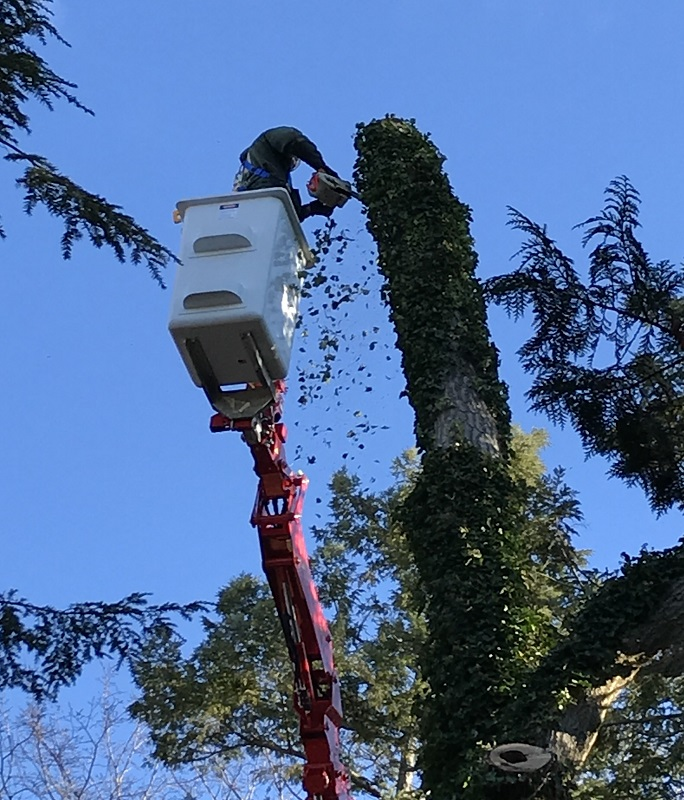 Arbor Pro Mini Lift tree care tree trimming and pruning - Stein Tree Service