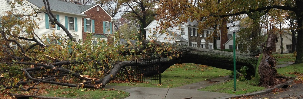 banner image - trees uprooted -tree care - Stein Tree 1000