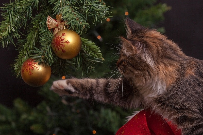 cat playing with ornaments on tree - Stein Tree Care Service Company