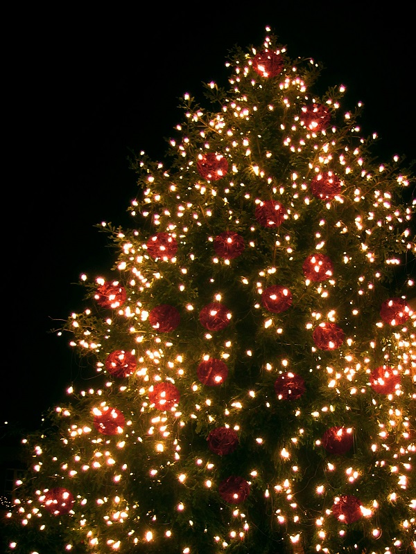 Live decorated Christmas tree outdoors | recycling Christmas trees | Stein Tree Service