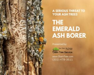 emerald ash borer ebook