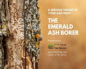 emerald ash borer ebook