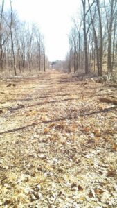 right of way clearing for utility line -Stein Tree Service 800