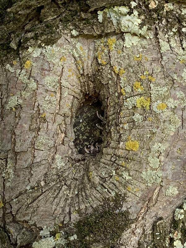 tree cavities - stein tree service