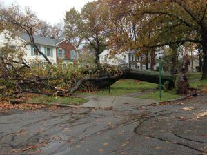 emergency tree removal service Wilmington DE