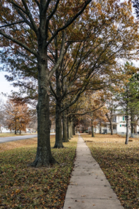 Sidewalk lined with trees | Tree City | Stein Tree Service