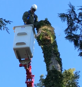 Tree Removal in Compact Spider Lift