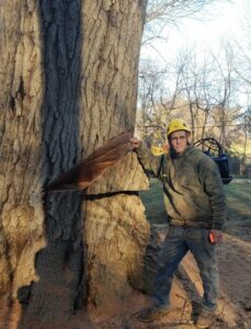 Tree Removal Wilmington - Stein staff next to large oak tree with wedge cut