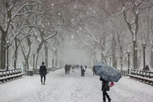 Park in winter with people walking in snow | Stein Tree Service | EAB survive the winter