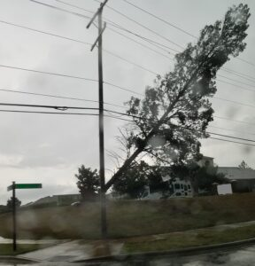 tree falling on power lines storm clean up