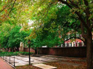 town sidewalk with trees, tree ordinances