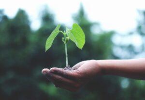 hand holding a tree sapling