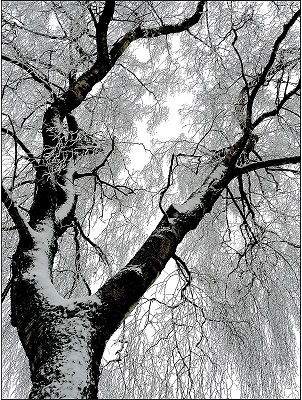 Tree covered with snow in winter   winter tree care   Stein Tree Service