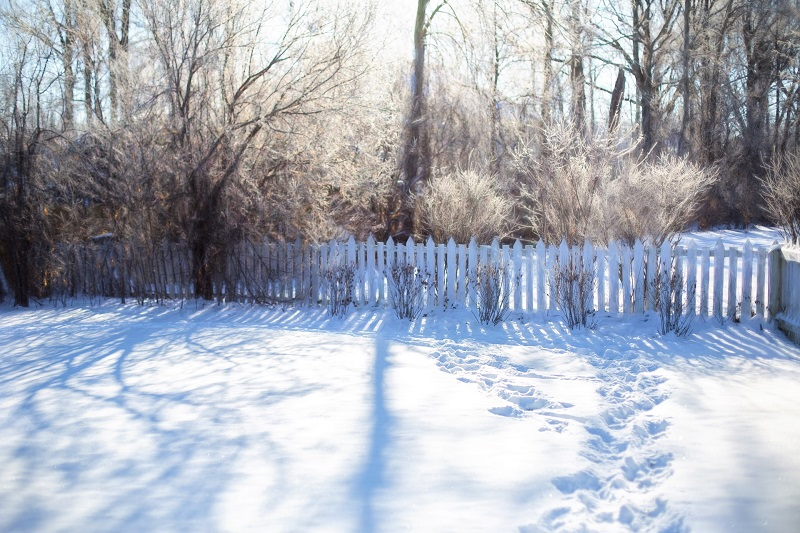 Yard with trees and plants during winter | winter tree problems | Stein Tree Service